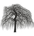 mulberry tree without leaves vector image