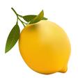 lemon realistic vector image vector image