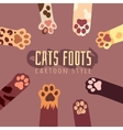background with cats foots in cartoon style vector image
