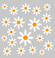 chamomiles on grey background vector image