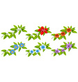 Flowers and green leaves vector image