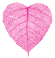 red heart skeleton leaf vector image
