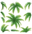 Branches of palm trees vector image