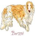 Borzoi dog breed vector image
