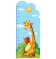 growth chart ruler with giraffe reading book vector image