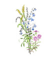 hand drawn beautiful wildflowers isolated on white vector image