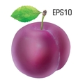 Plum isolated - EPS 10 vector image
