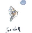 Sea shell vector image