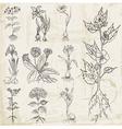 Set of Vintage Flowers vector image