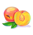 Peach hand drawn on a white background vector image