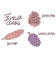 Forest conifer cones set vector image