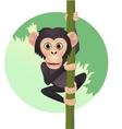 chimpanzee cartoon vector image
