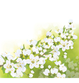 spring blossom branch vector image vector image