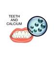 healthy teeth and calcium vector image