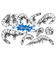 seafood collection shrimp vector image
