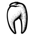 cartoon image of tooth icon dentistry symbol vector image