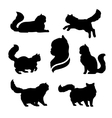 Persian cat icons and silhouettes vector image