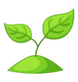 sprout icon cartoon style vector image