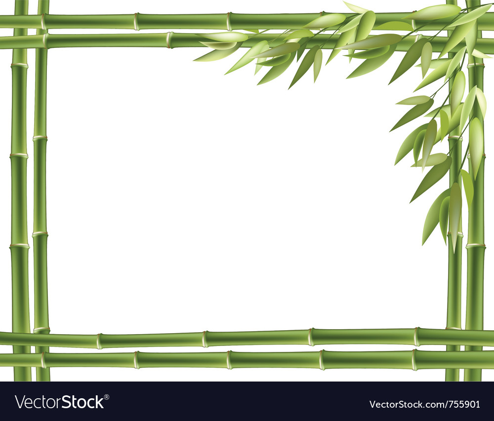 Bamboo frame background vector