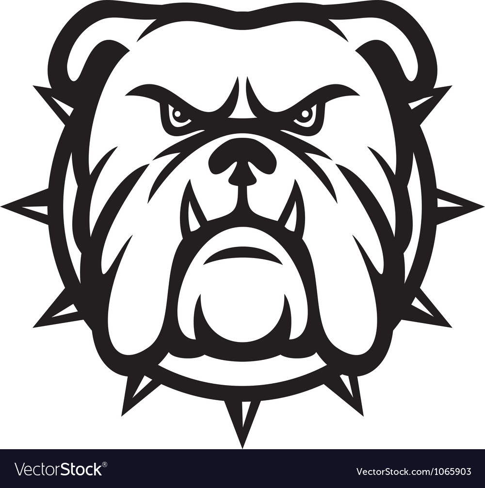 Bulldog head  angry bulldog vector