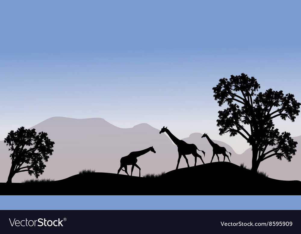Giraffe in hills scenery vector