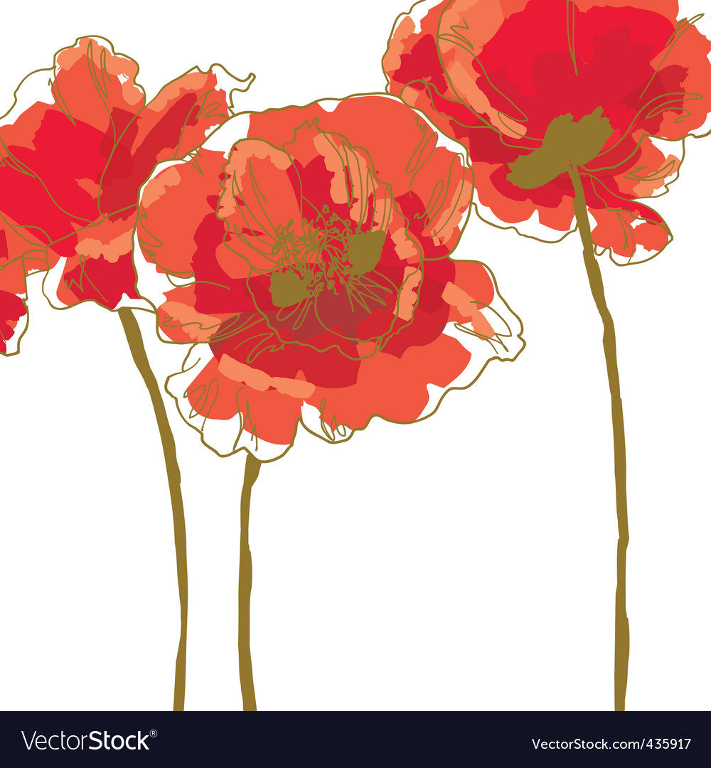Three flower of poppy vector