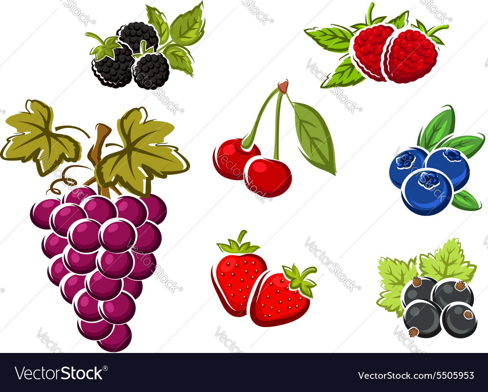 Sweet ripe isolated berries and fruits vector