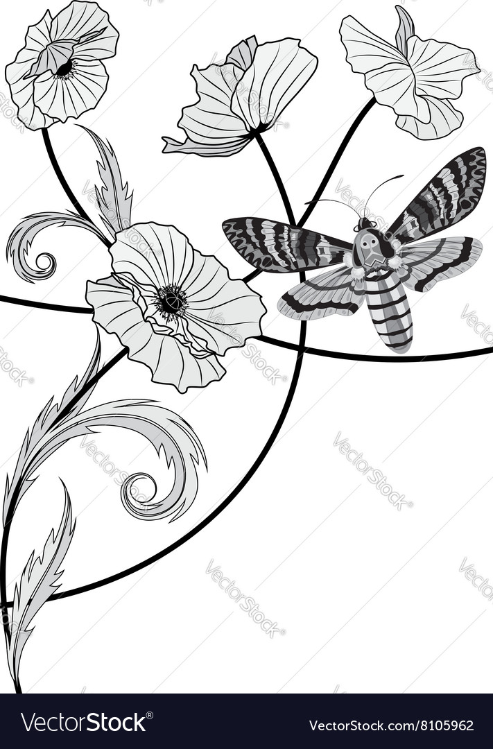 Moth and poppy vector