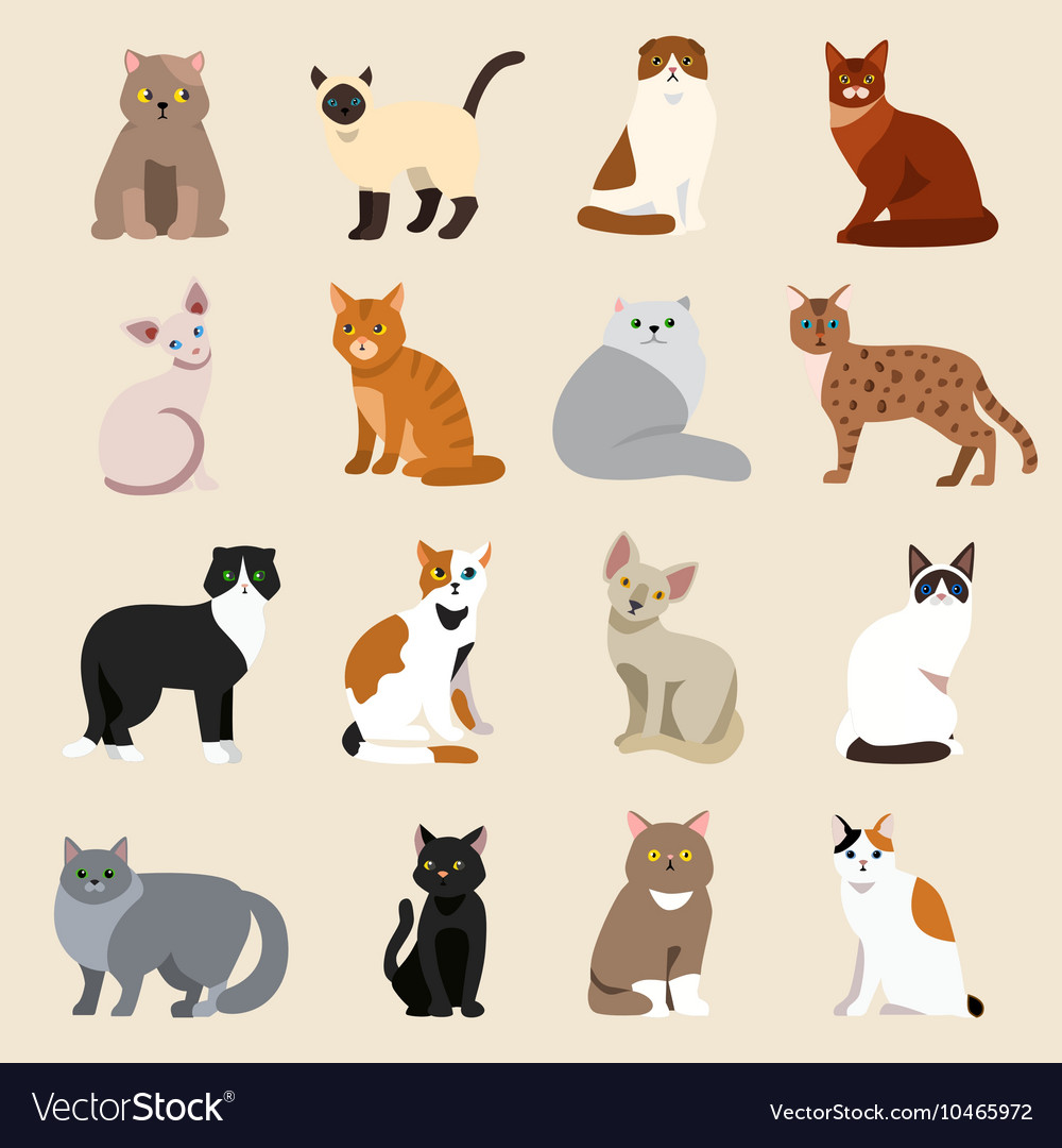 Cat breeds cute pet animal set vector