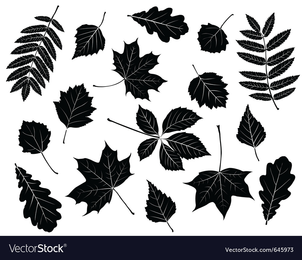 Set of silhouettes of leaves vector