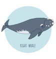 Right whale isolated on blue vector image