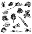 Set of Nature Grunge Elements vector image