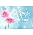 Gerbera Flower Background and Spring is coming vector image