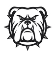 Bulldog head - angry bulldog vector image