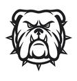 Bulldog head - angry bulldog vector image
