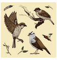 birds fly in the air sparrow and feather vector image