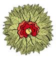 Floral Flower Ornamental Design vector image