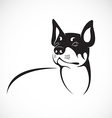 image of an chihuahua dog on white background vector image