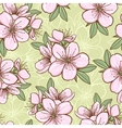 Seamless pattern with cherry blossom vector image