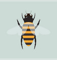 bee with wings vector image