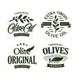 olive oil premium quality olives branch vintage vector image