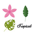 set of tropical leaves and flowers design vector image