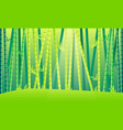 landscape bamboo forest vector image
