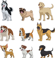 Set purebred dogs vector image