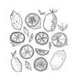 lemons black and white citrus fruits for coloring vector image
