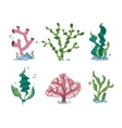 Underwater seaweeds aqua kelp ocean and aquarium vector image