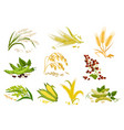 grain and cereals ears isolated icons vector image vector image