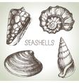 Seashells hand drawn set Sketch design elements vector image vector image