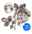hand drawn rose flower vector image