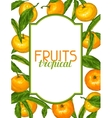 Frame with mandarins Tropical fruits and leaves vector image